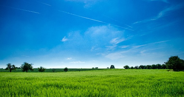 WANTED - up to 100 acres of grassland or tillage in East Cork.