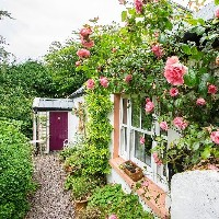 This dreamy Cork cottage comes festooned with pink roses (and it's €225k)